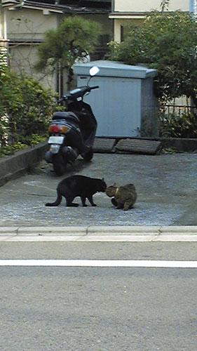 2012-01-19_koro9648.jpg