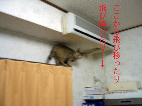 mi-yan4178.jpg