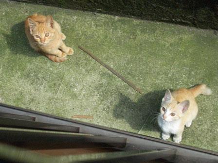 2007.10.10-141beranda-sita-.jpg