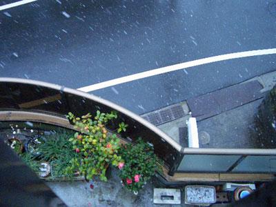 2011-02-12_みぞれ4305.jpg