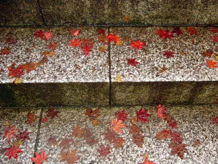 2012-11-26_6546.jpg