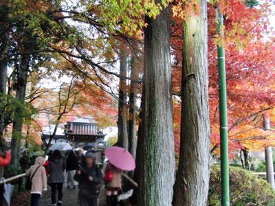 2012-11-26_6597.jpg