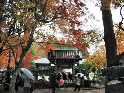 2012-11-26_6599.jpg