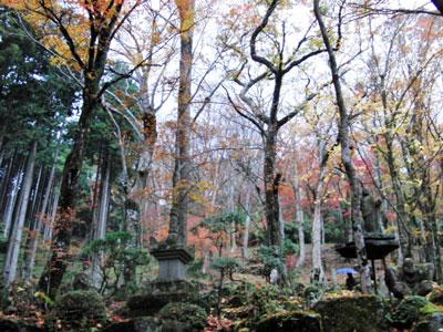 2012-11-26_6615.jpg