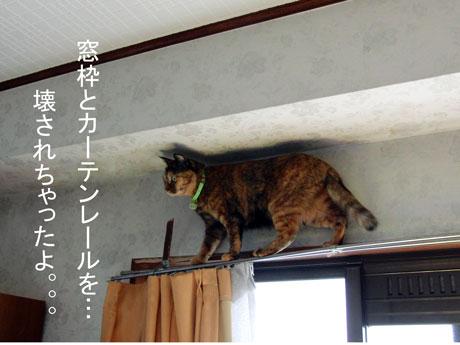 2012.07.07miya.jpg