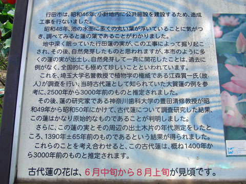 2013-08-05_s0981.jpg