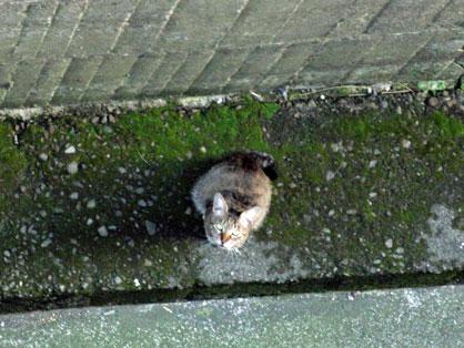 3階から撮影2010-07-08_2515.jpg