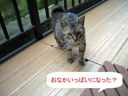 おなかいっぱい2010.3.15-058.jpg