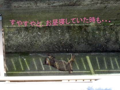 昼寝2010-01-27_0775.jpg