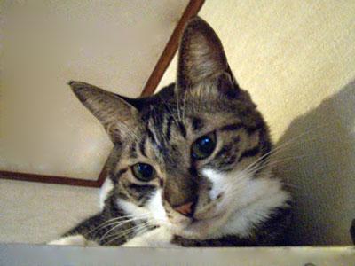 kokochibi2007.9.7-010.jpg