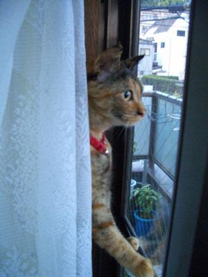 mi-yan2009.4.24-245.jpg