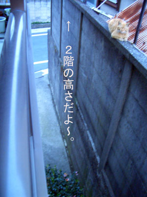 tyatora-osu2009.4.24-250.jpg