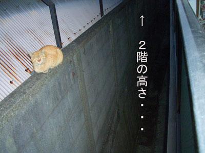 tyatora-osu2009.4.24-253.jpg
