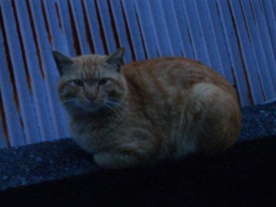 tyatora-osu2009.4.24-254.jpg