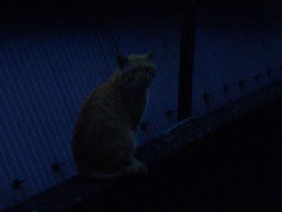 tyatora-osu2009.4.24-255.jpg