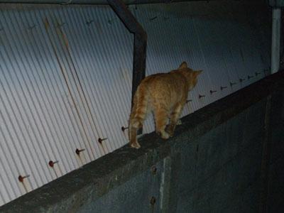 tyatora-osu2009.4.24-256.jpg