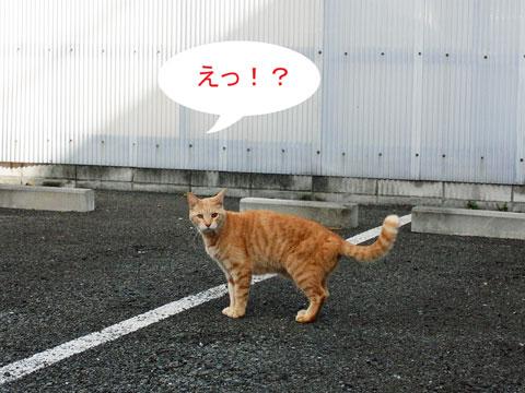 tyusyajou-neko2010-11-23_37.jpg